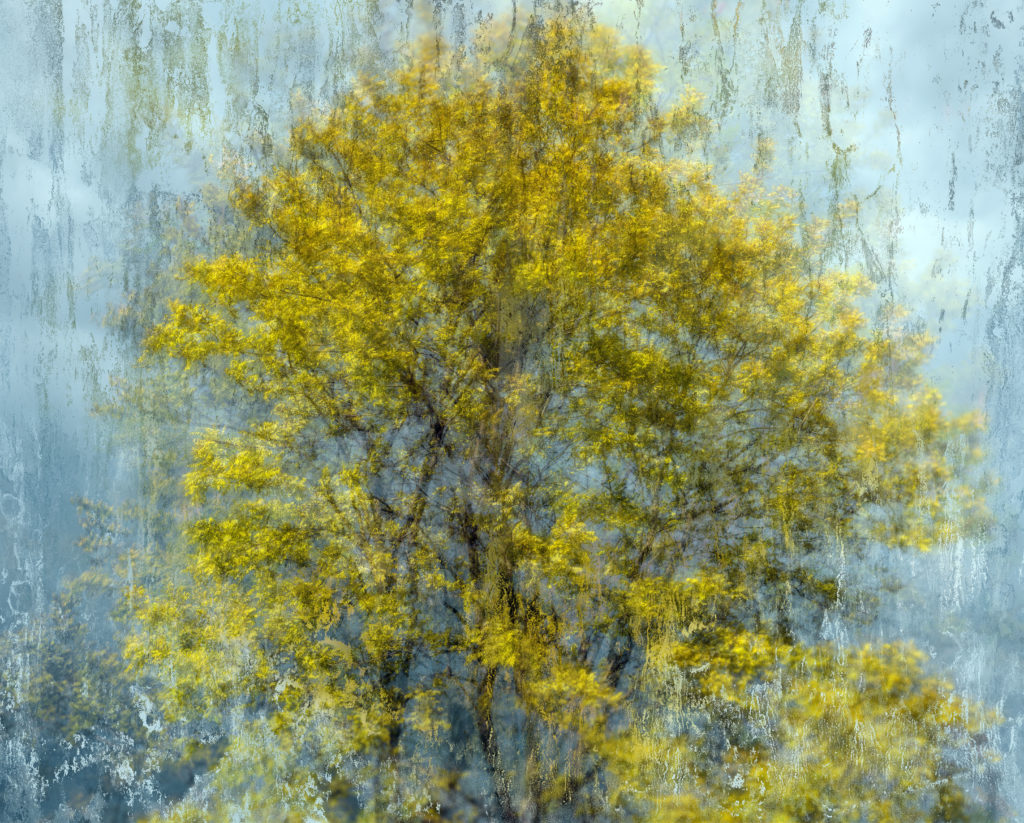 Arpad Polgar, Transient topography, Fleeting gardens n° 6 season 1, 2019. Edition of 3 + 1 artist print (all sizes included). Small size approx. 70x87cm, 4'000.- CHF, Big size approx. 95x118cm, 7'000.- CHF.