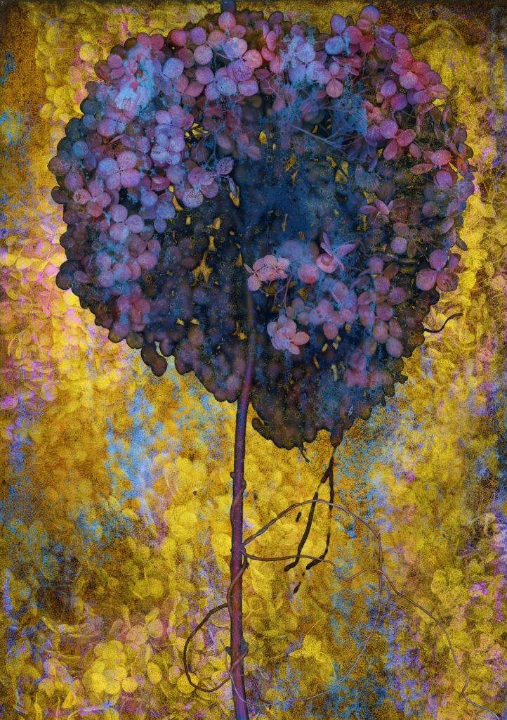 Arpad Polgar, BOTANICA late bloom 2020, ed. 3+1ap tailles 70x50 cm à CHF 4'000.- ou 120x83 cm à CHF 7'000.-